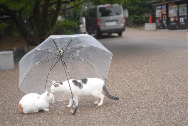 傘を貸す猫