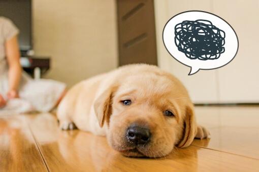 モヤモヤした感情を抱える犬の様子