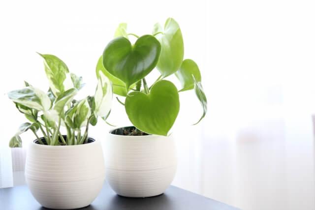 観葉植物その1