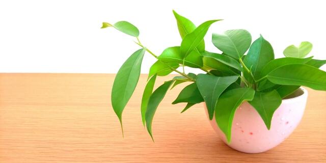 観葉植物その2